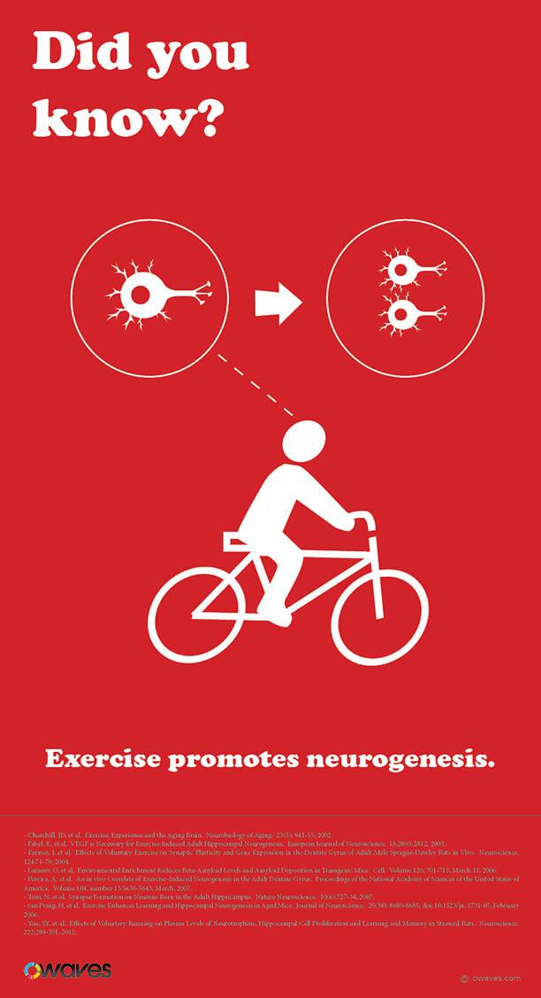 Infographics: Exercise Promotes Neurogenesis