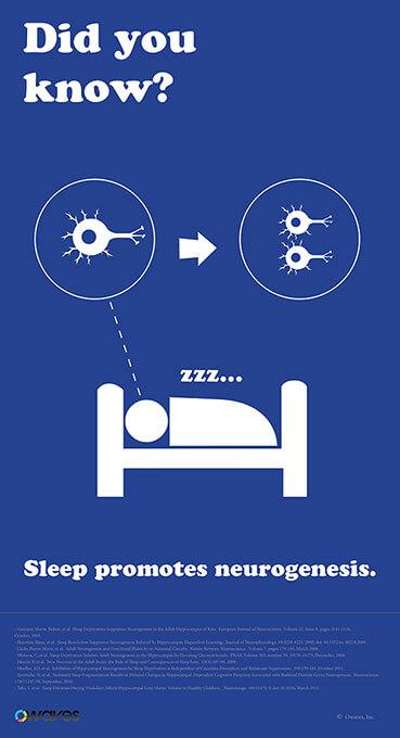 Infographics: Sleep Promotes Neurogenesis
